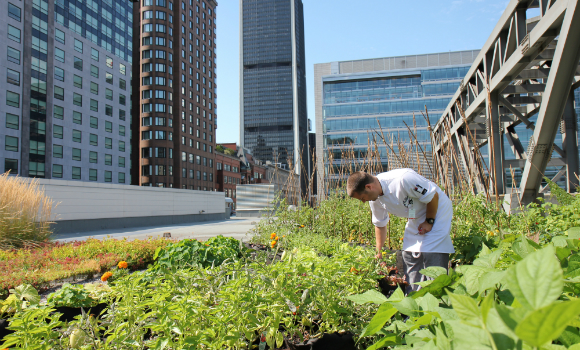 Urban Agriculture Lab Sets Green Standard Corporate Meetings Network