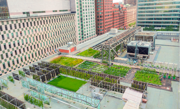 Urban Agriculture Lab Sets Green Standard Corporate